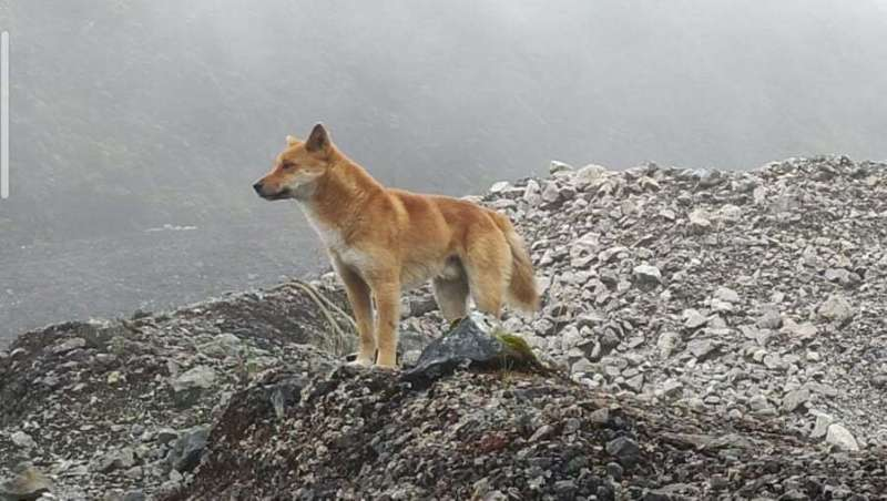 Discovery of an ancient dog species may teach us about human vocalization