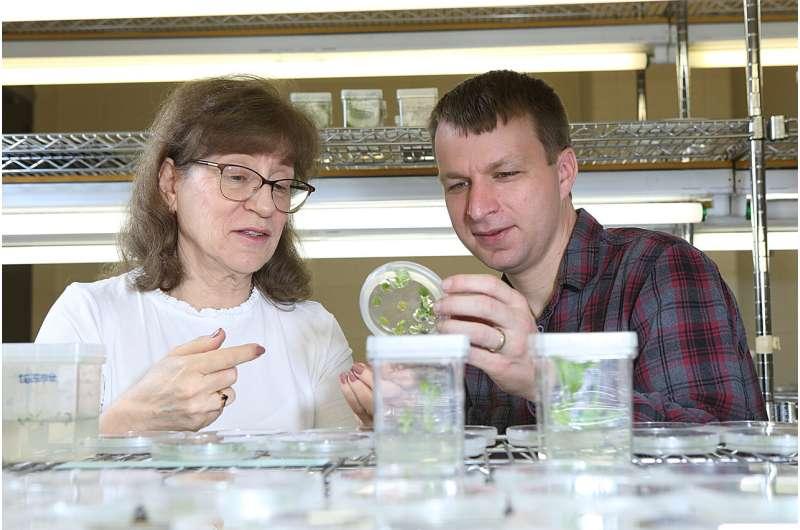 Scientists find link between key plant amino acid and essential hormones