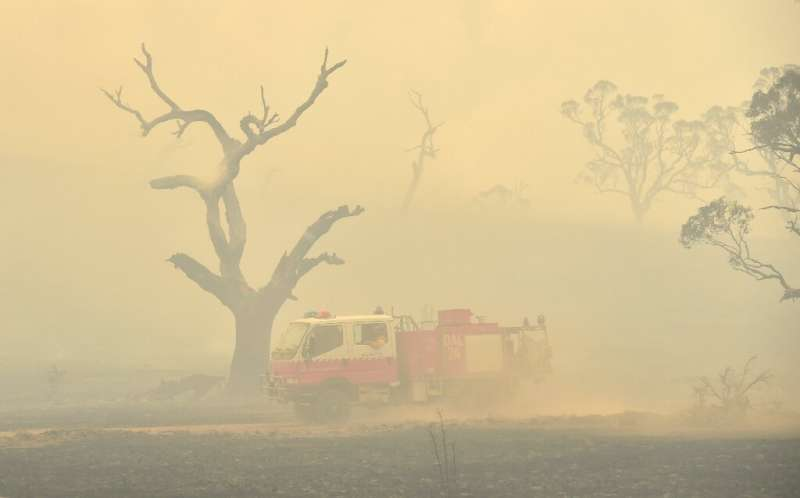 Bushfires have scorched large swathes of Australia in recent months