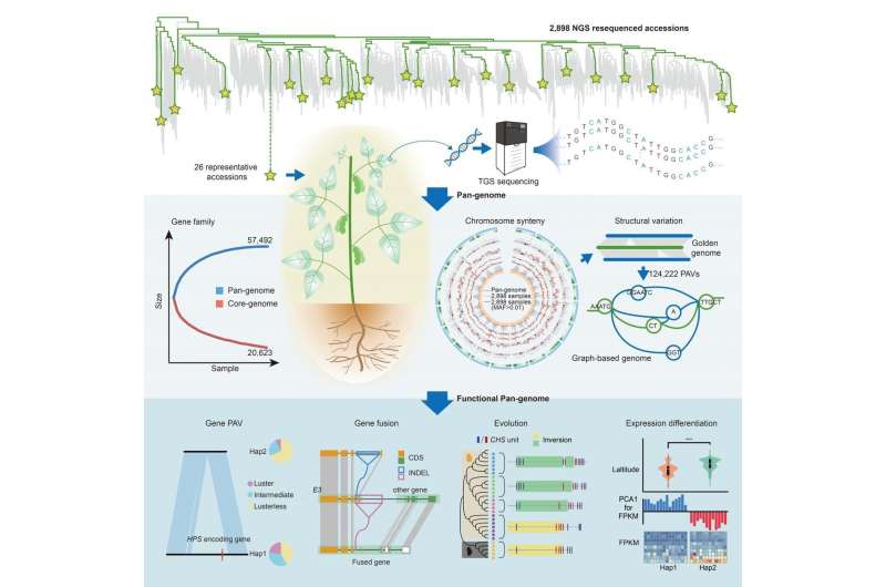 Chinese scientists construct high-quality graph-based soybean genome