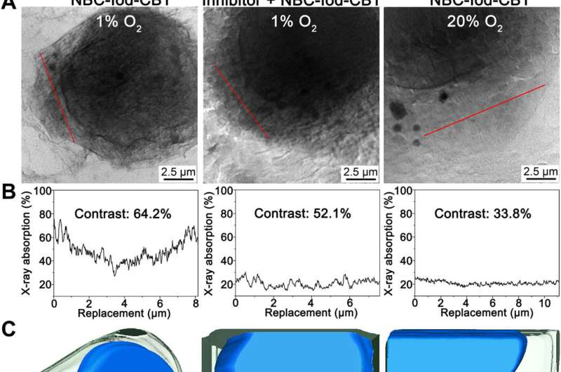 Directly observing intracellular nanoparticle formation with nano-computed tomography