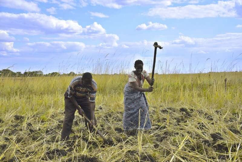 Identifying local solutions in the barotse floodplain for sustainable agricultural development