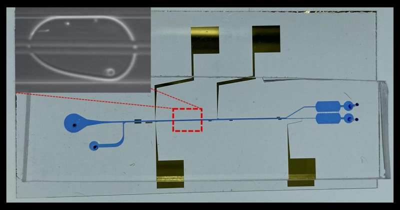 Microfluidic system with cell-separating powers may unravel how novel pathogens attack
