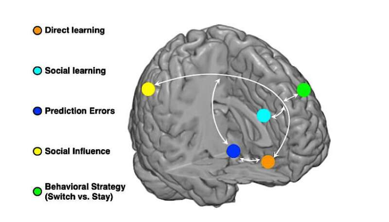 Neuroscientists delineate social decision-making in the human brain