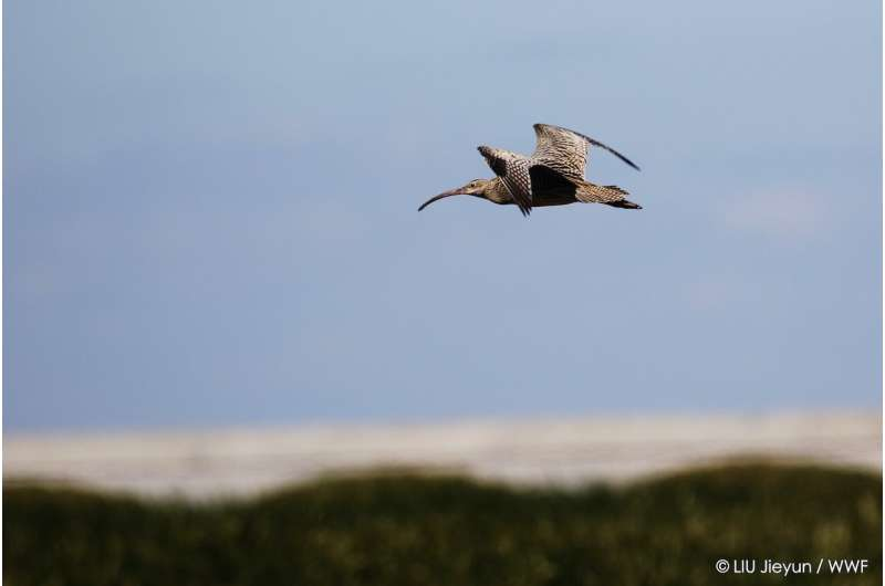 New Asian Flyways Initiative to conserve wetlands for people and migratory birds