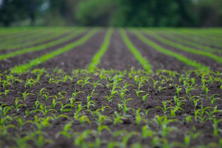 New method for measuring RNAi pesticide insoil