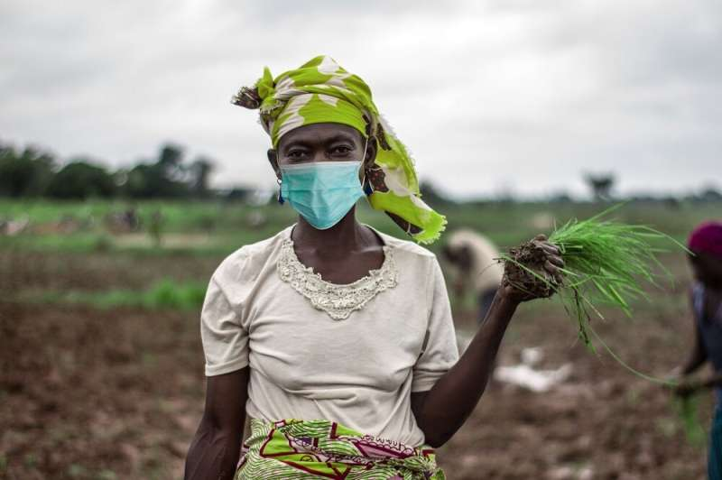 New research highlights impact of COVID-19 on food security in Kenya and Uganda