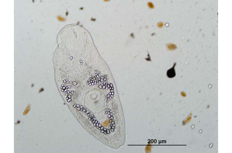 New studies show how to save parasites and why it's important