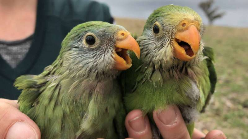 New study could offer helping hand for picky parrots