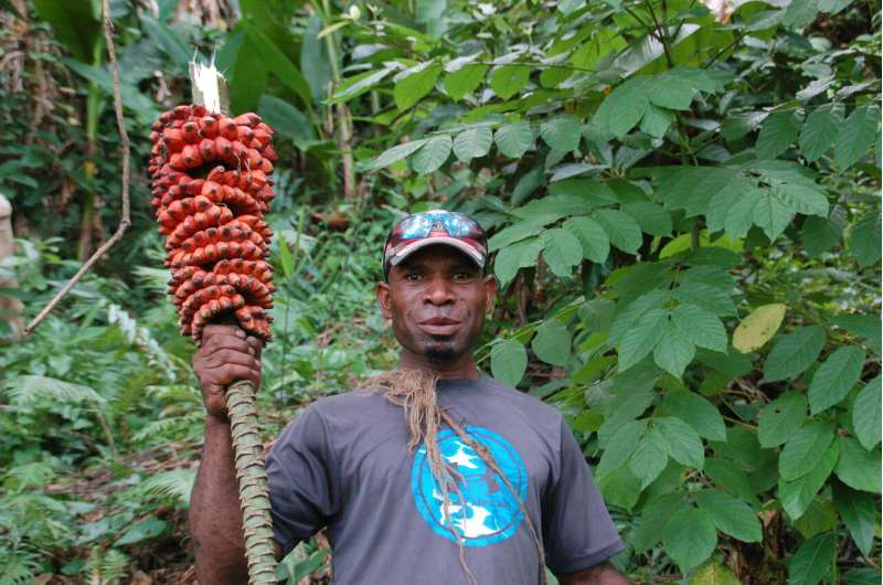 On the hunt for wild bananas in Papua New Guinea