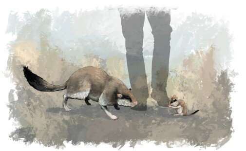 Researcher reconstructs skull of two million year-old giant dormouse