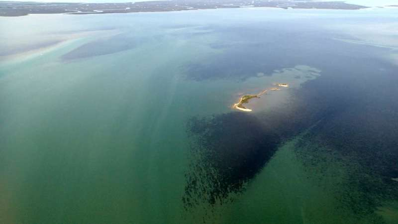 Restoring seagrasses can bring coastal bays back to life