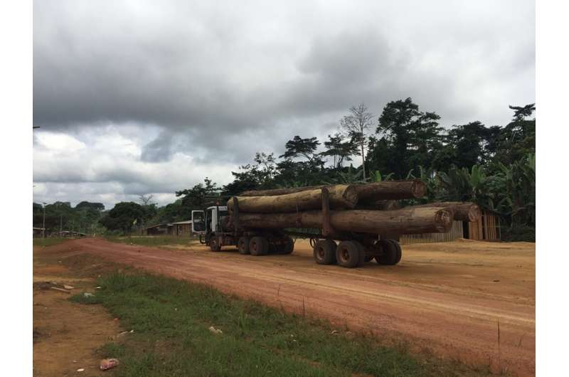 Saving Africa's biggest trees to help Earth breathe