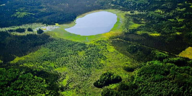 Scientists pinpoint areas in boreal forests that offer refuge to plants and animals as climate gets warmer and drier