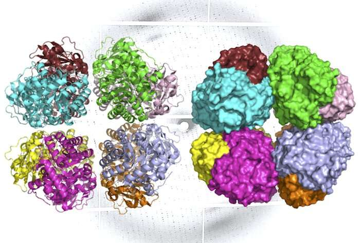 Study finds 'missing link' in the evolutionary history of carbon-fixing protein rubisco