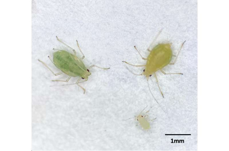 Targeting the bacteria inside insects for improved pest management