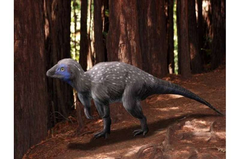 The mystery of feather origins: how fluffy pterosaurs have reignited debate