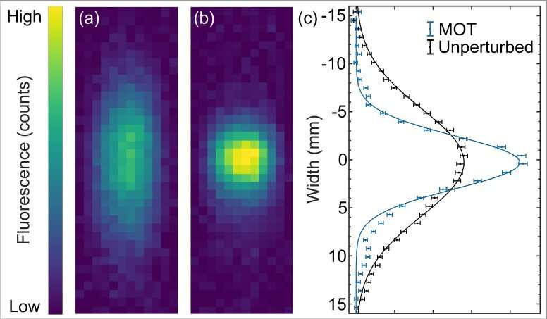 The realization of a 1D magneto-optical trap of polyatomic molecules