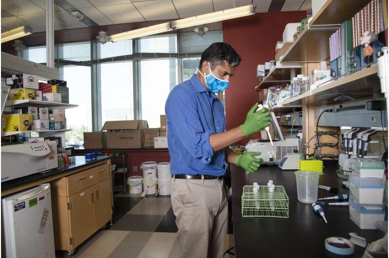 UArizona Health Sciences researchers identify new target for creating flavivirus vaccines