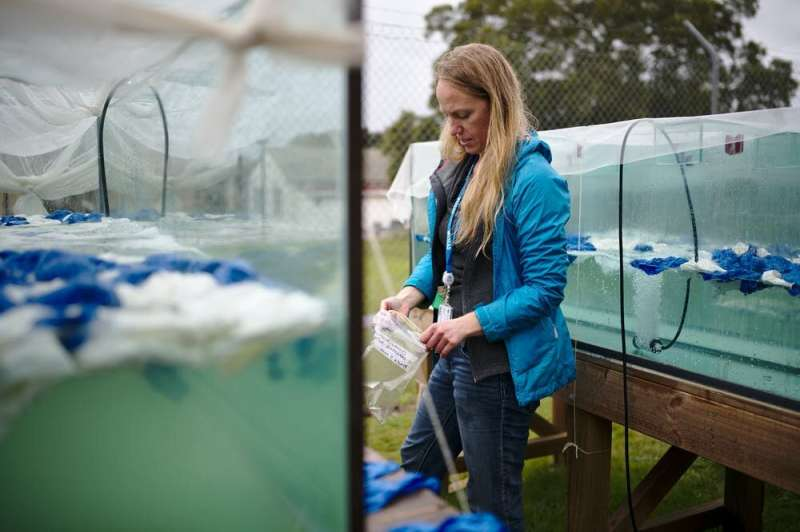 We composted 'biodegradable' balloons. Here's what we found after 16 weeks