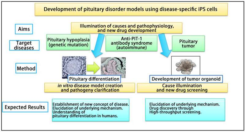 World's first congenital pituitary hypoplasia model developed using patient-derived iPS cells