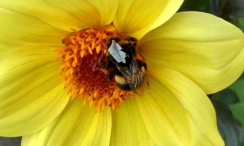 Researchers make 'high vis vests' to help monitor bee behaviour