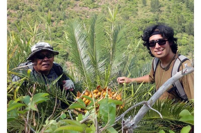 University of Guam part of international effort to understand cycad pollinators