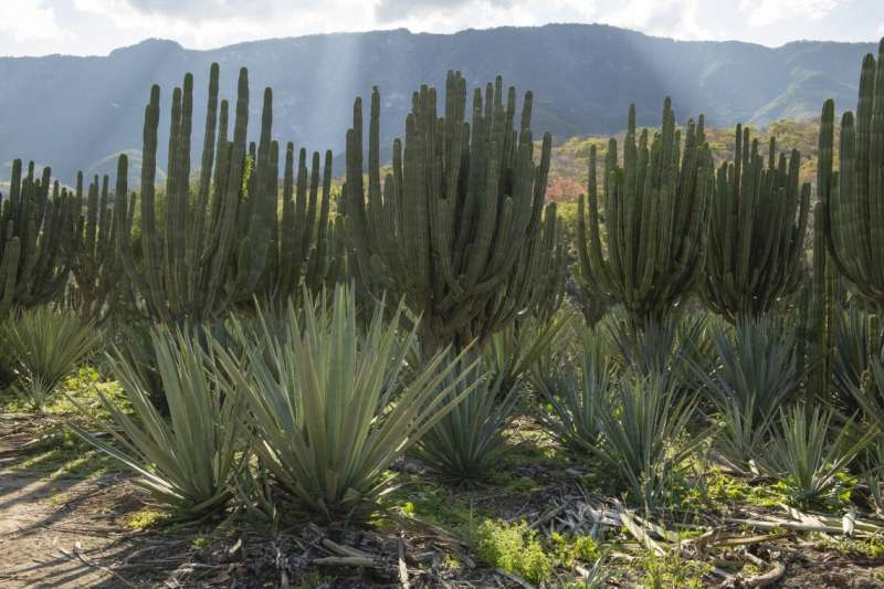 Researchers propose climate-smart desert food production model for land and human health