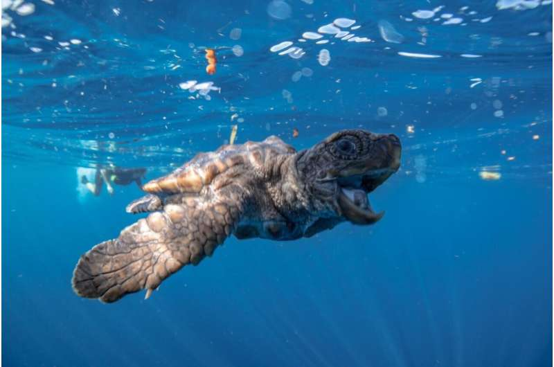 Scientists develop new way to identify the sex of sea turtle hatchlings