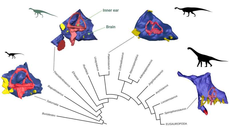 Research reveals unexpected insights into early dinosaur's brain, eating habits and agility