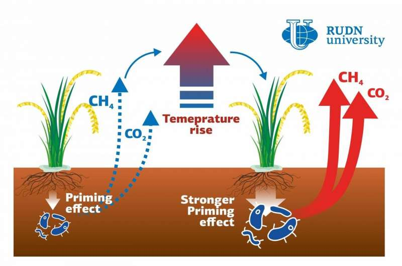 RUDN University scientist showed global warming effect on greenhouse gas emissions in paddy soils