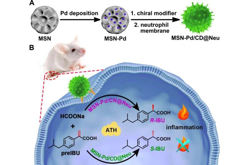 Scientists propose strategy for site-selective chiral drug synthesis in living systems
