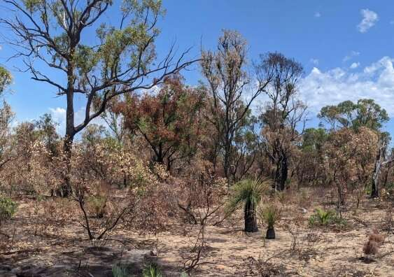 Caves face new unknown after unprecedented bushfires