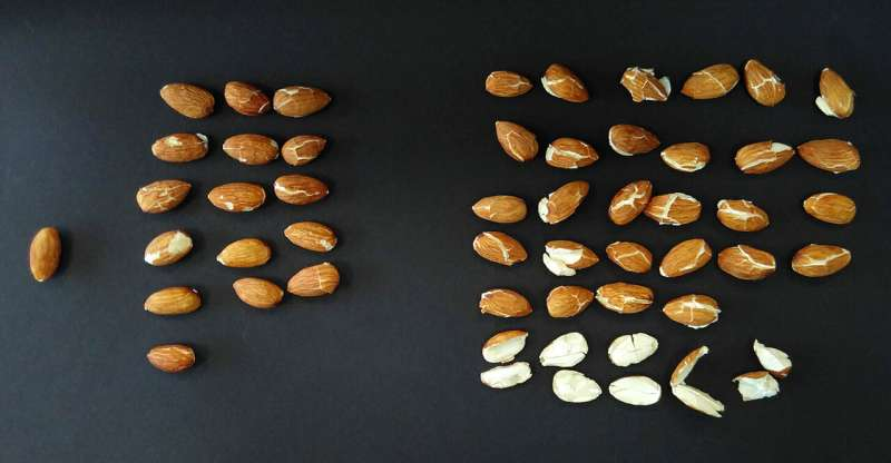 Decontaminating almonds and nuts with compressed carbon dioxide
