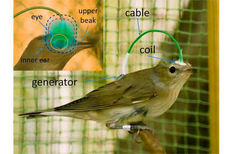 Microelectronics for birds