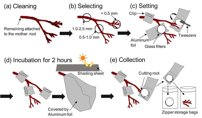 New method for capturing carbon via root exudates in wild forest