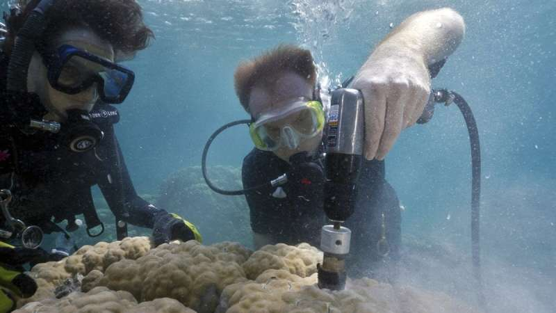 """Ocean acidification causing coral """"osteoporosis"""" on iconic reefs"""