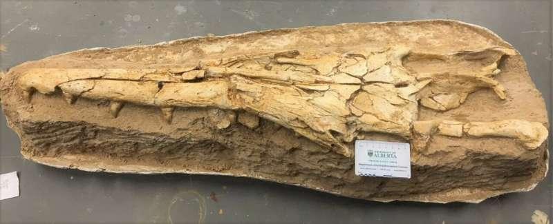 Paleontologists identify new species of mosasaur
