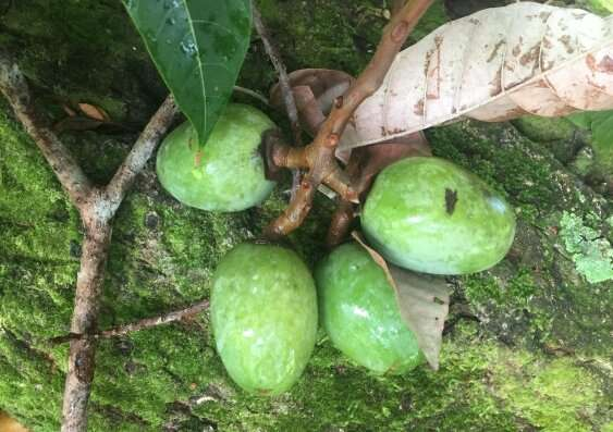 Protecting Indigenous bush foods and medicines against biopiracy