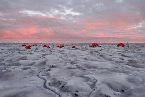 Research shows how glacier algae creates dark zone at the margins of the Greenland Ice Sheet