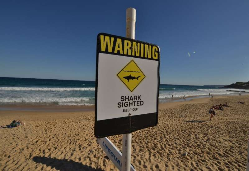 There have been eight fatal shark attacks in Australian waters so far in 2020, according to Australian Shark Attack File