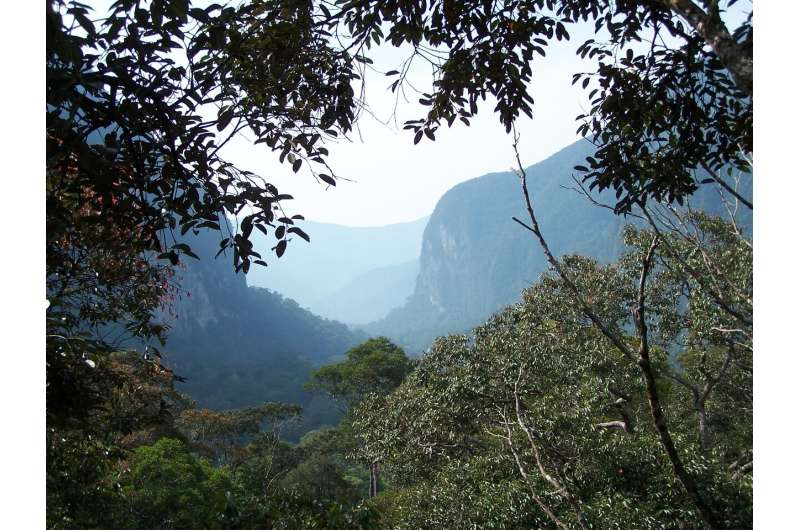 Tropical forests can handle the heat, up to a point