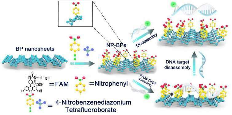 Researchers fabricate functionalized black phosphorus nanosheets for circulating tumor DNA detection
