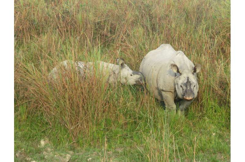 Researchers turn DNA detectives to aid rhino poaching prosecutions with forensic evidence