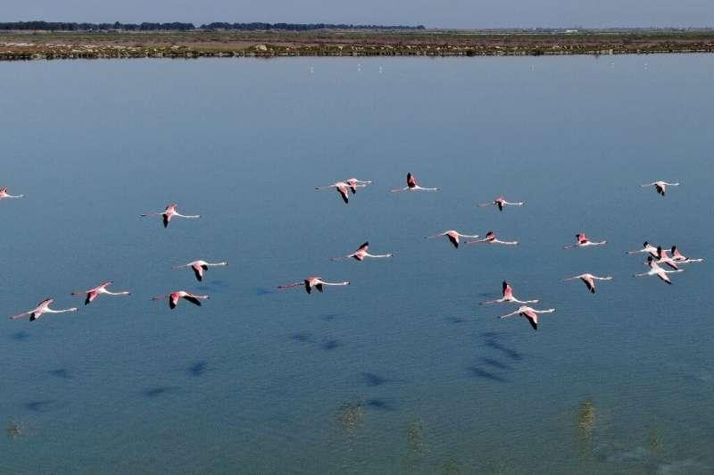 The coronavirus lockdown has brought a welcome reprieve for Albania's flamingos