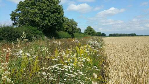 Agricultural conservation schemes not enough to protect Britain's rarest butterflies