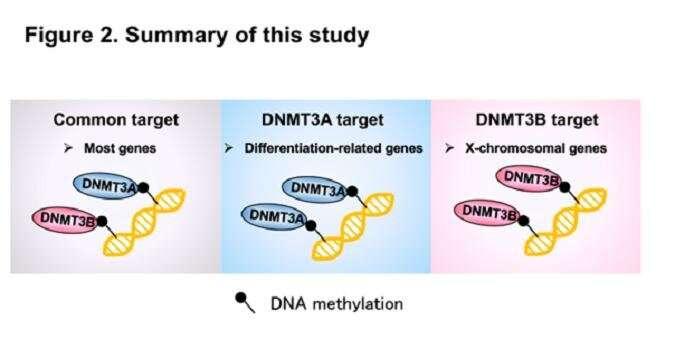 Identification of distinct loci for de novo DNA methylation by DNMT3A and DNMT3B during mammalian development