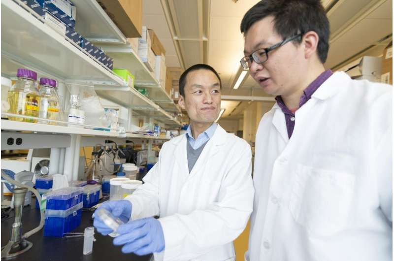 Research identifies critical protein in cancer treatment-related heart damage