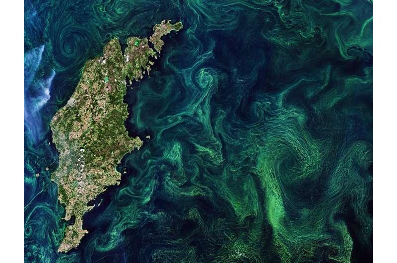 Shedding light on the ocean's living carbon pump