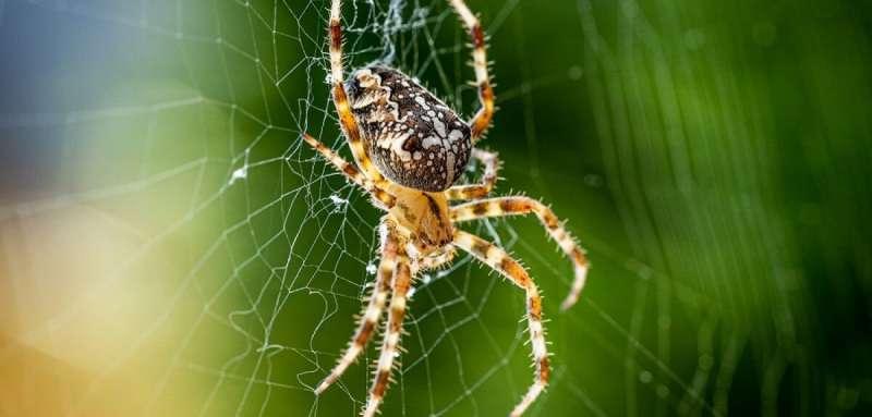 Unravelling the secrets of spider limb regeneration to inspire new gen soft-robotics